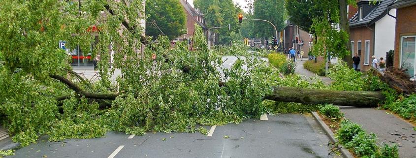 Stabile Betonfertiggaragen schützen Auto vor umgestürzten Bäumen